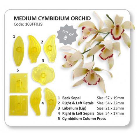 JEM Medium Cymbidium Orchid